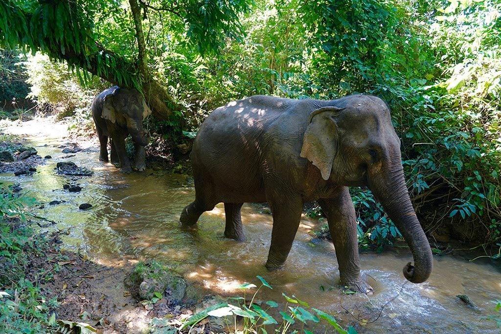 Inside The Hearts Of Elephants Mandalao Elephant
