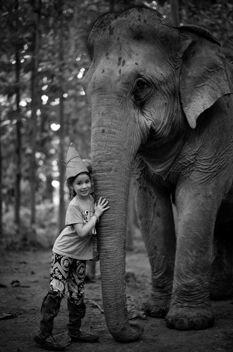 Meeting a family of elephants in the jungle