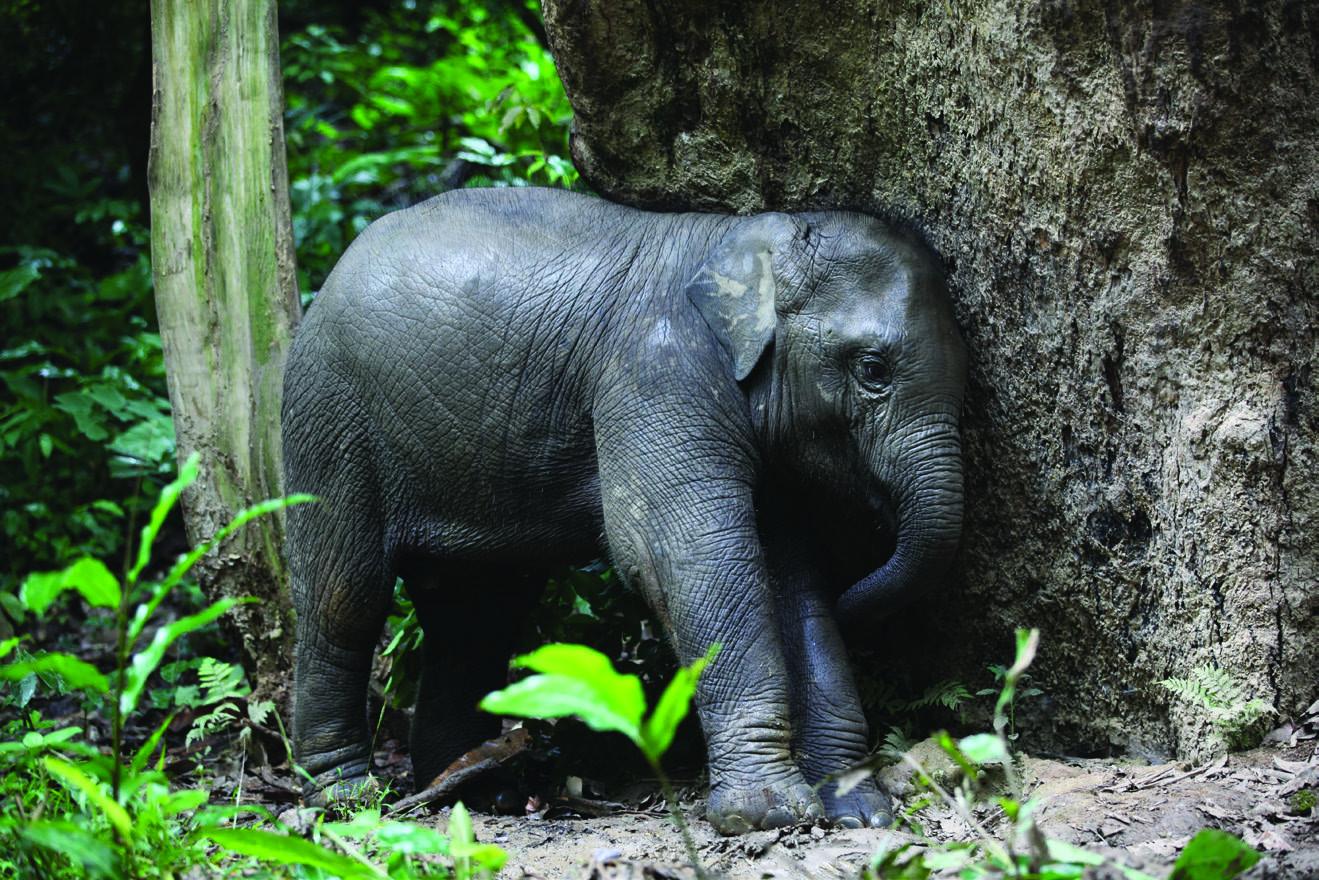 Mandalao Elephant Conservation
